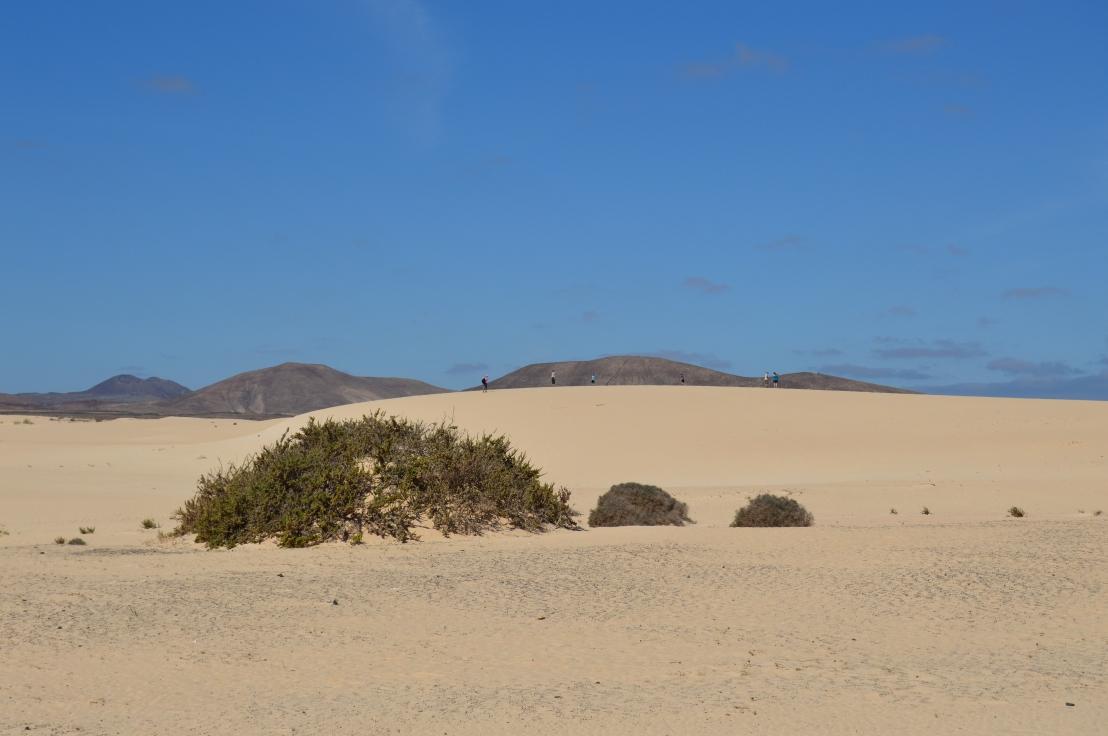 Parque Natural Dunas de Corralejo & Isla de Lobos ◇ Fuerteventura ◇ IslasCanarias